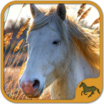 Horse Puzzles Collection APK (MOD, Unlimited Money) 5.22.020 for android