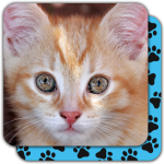 Puzzle Games free: Cute Cats APK (MOD, Unlimited Money) 5.22.020 for android