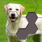Hexa Jigsaw Puzzle APK MOD Unlimited Money 38.01 for android