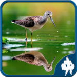 Reflection Jigsaw Puzzles APK MOD Unlimited Money 1.9.17 for android