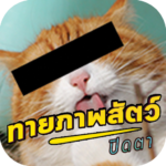 APK MOD Unlimited Money 1.1.0 for android