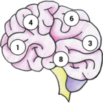Brain Memory Exercise APK MOD Unlimited Money 1.12 for android